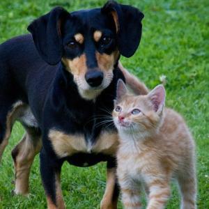 ペット保険を比較して加入しよう