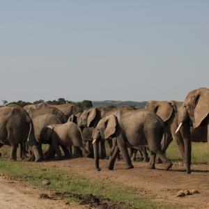 ケニアひとり旅⑬【広大なサバンナを悠然と歩く象の群れと青空トイレ】