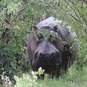 ケニアひとり旅⑲【発狂寸前で川を爆走するカバと可愛い動物&人間たち】