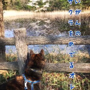 犬日記:愛でる散歩道