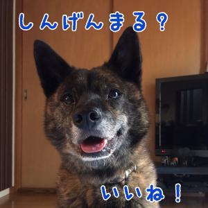 犬日記:オレの名前