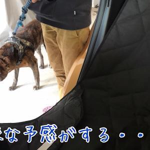 犬日記:一年で一番嫌いな日