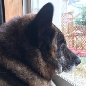 犬日記:雨の日はヒマ
