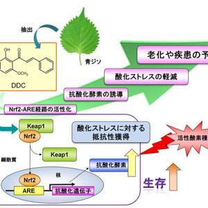 認知症の原因に「酸化ストレス」 岡山大研究、サプリ投与で予防も