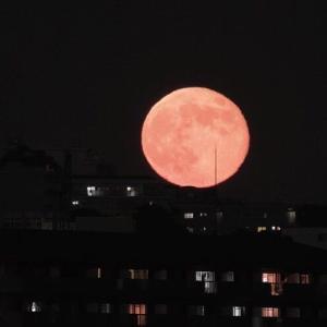 ふと見上げると赤い月が…アユガール、有田川で釣りを楽しむ