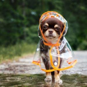 梅雨のアユ釣りは、このアイテムなら安心さ