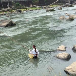 トモ釣り最盛期のアユ攻略!岐阜県馬瀬川、白川で大爆釣