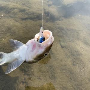 阿武隈川、10年ぶり「釣り」再開へ 4月1日から