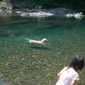 和歌山・龍神地区 美形の天然アマゴ連発36匹