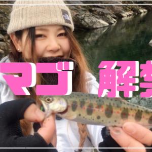 アマゴ解禁!見とれる鮮やかさ…和歌山・玉川峡
