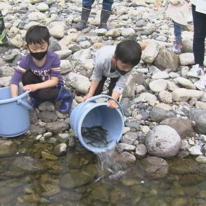 銚子川の鮎
