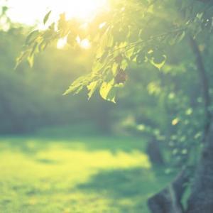 幻想的な朝の雰囲気のアンビエント