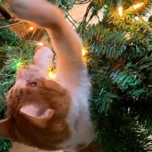 小麦とクリスマスツリー