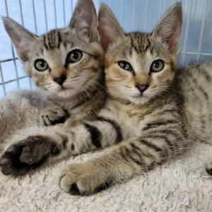 譲渡会参加予定の猫たち
