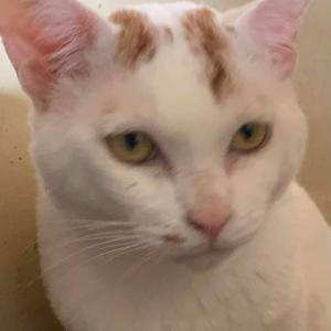 猫の預かりさんや飼い主さん募集(多頭飼育)