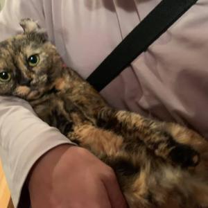 保護猫はたぬチャン