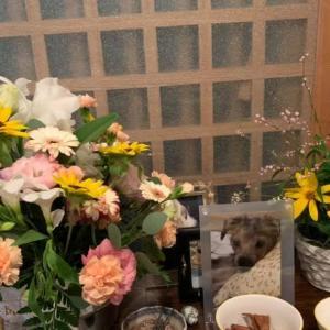 なっちゃん! お花が届いたよ