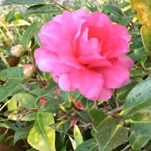花のお便り1231