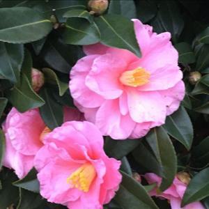 花のお便り0116