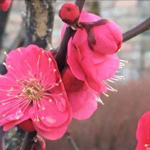 花のお便り0222