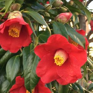 花のお便り0331