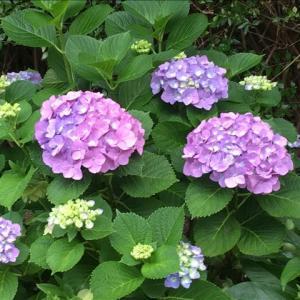 花のお便り0621