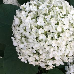 花のお便り0623