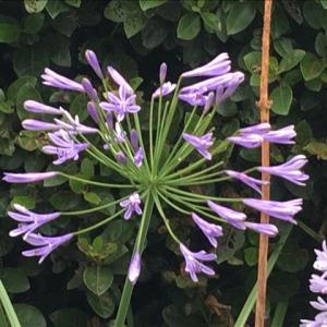 花のお便り0719