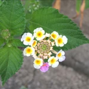 花のお便り0913