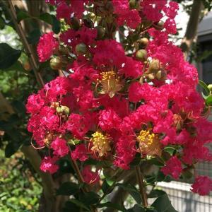 花のお便り0915