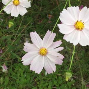 花のお便り1015