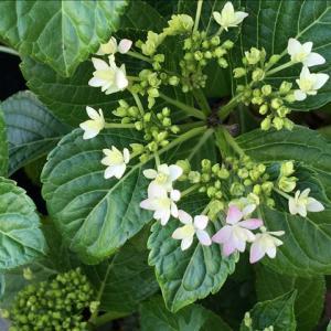 花のお便り0527