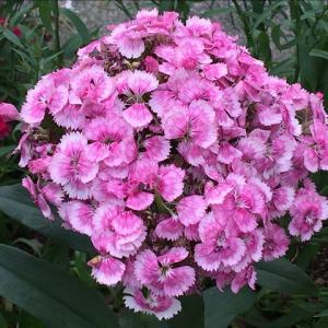 花のお便り0606