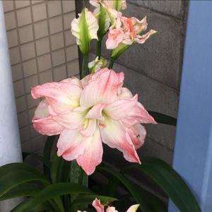 花のお便り0608