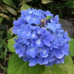 花のお便り0706