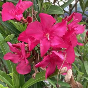 花のお便り0711