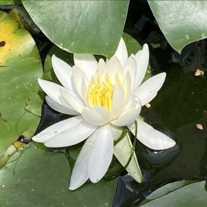 花のお便り0718