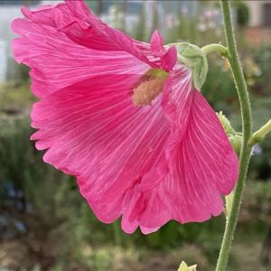 花のお便り0720