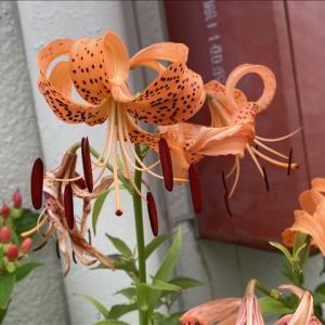 花のお便り0725