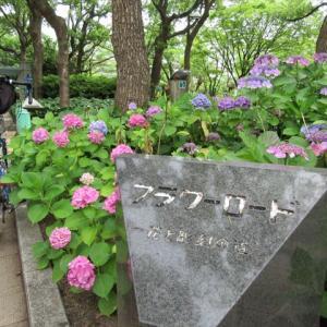 神戸散歩  神戸市とアジサイ