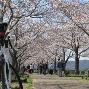 兵庫県 おの桜づつみ回廊