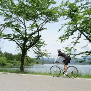 滋賀県 余呉湖のサワオグルマ