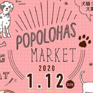 【ポポロハスマーケット】今回のテーマは「わんこ&にゃんこ」!和歌山ぶらくり丁商店街で毎月第2日日曜日開催のイベント!