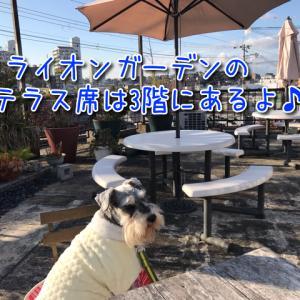 【ライオンガーデン】開放的なテラス席ワンちゃん同伴OK!ふわふわパンケーキやすっぽん料理を楽しめます♪