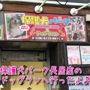 【保護犬パーク長居店】屋内ドッグラン&トリミングサロンあり!里親募集やふれあいもできるお店!