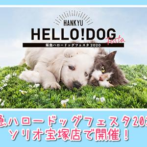 【阪急ハロードッグフェスタ2020】ソリオ宝塚店で2月22~24日開催!愛犬と参加できる楽しいイベントがいっぱい!!