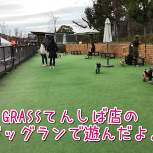 【天王寺】GRASSドッグ&キャットてんしば店のドッグラン♪ミニアジリティで元気に遊ぼう♪