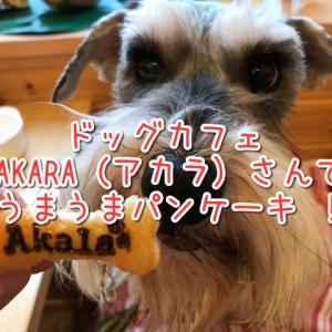 ドッグカフェAKARA(アカラ)でパンケーキ!店内ワンちゃん同伴OK!テラス席は大型犬も利用可!