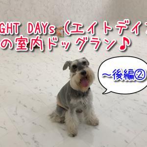 大阪室内ドッグランあり♪EIGHT DAYs(エイトデイズ)はワンちゃんの総合施設!~後編②