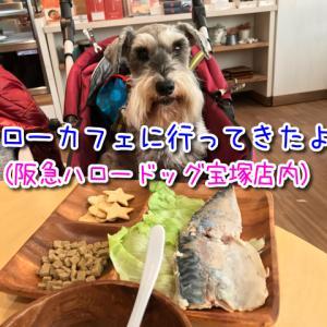阪急ハロードッグ宝塚店にあるドッグカフェ「ハローカフェ」に行ってきたよ♪レポート!